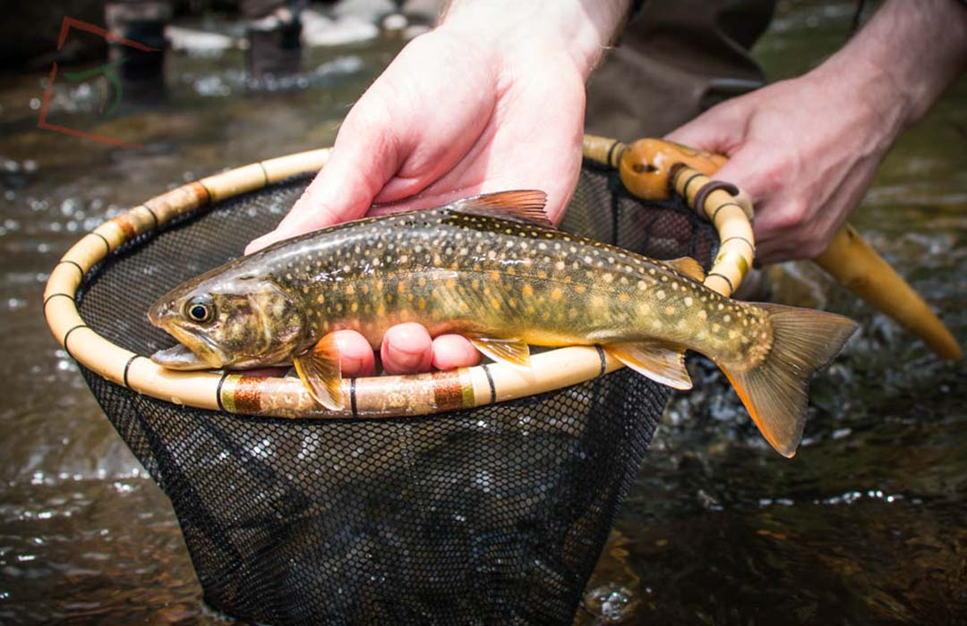 Traditional Japanese Fly Fishing, in the UK? Tenkara Explained