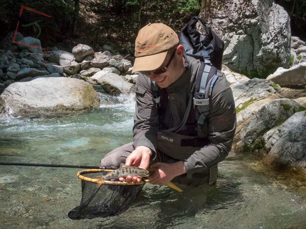 A beautiful Amago caught from a stunning Japanese mountain stream.